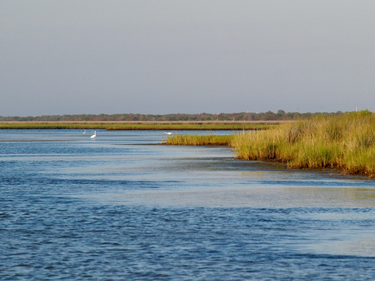 The Pamlico Sound is a treasure.