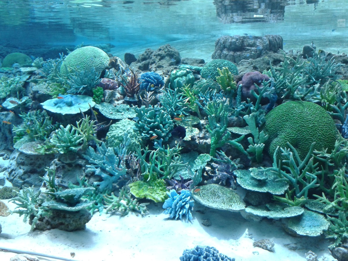 There are lots of species in the aquarium