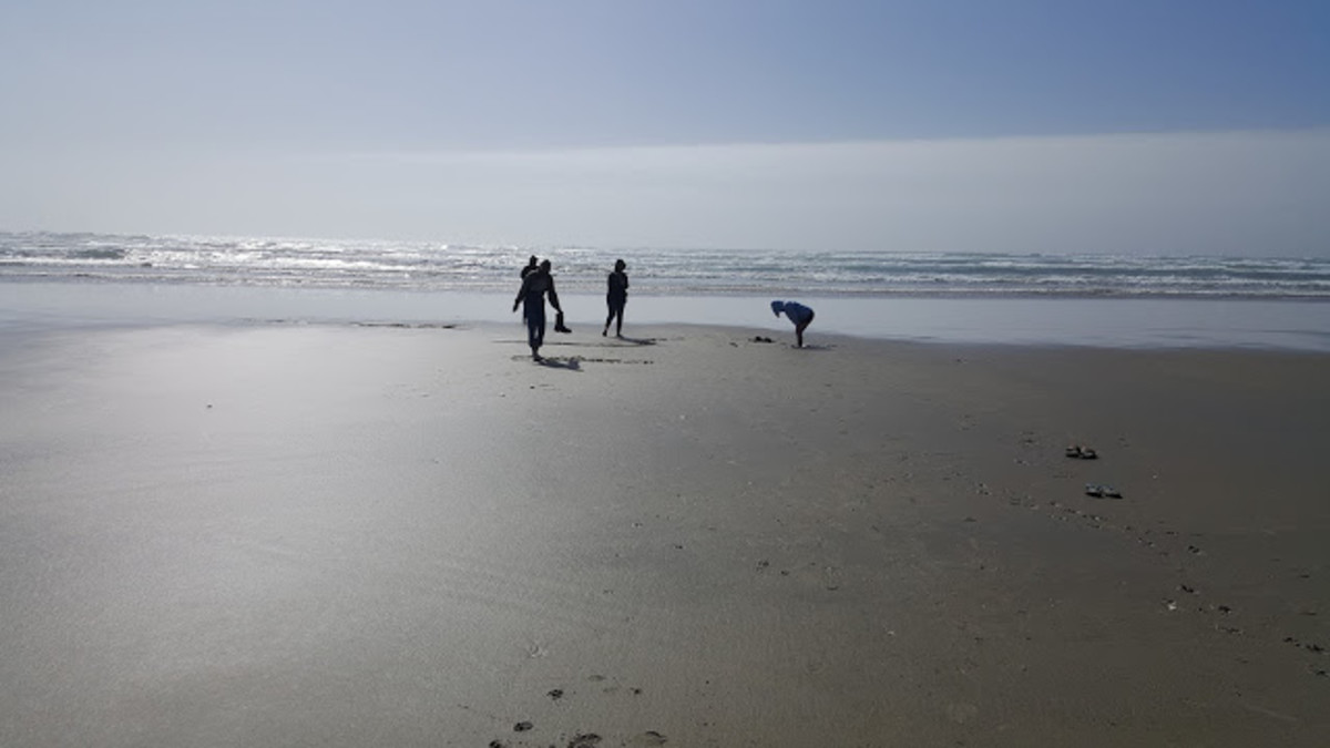 A walk along the beach in Winchester Bay is serene, but not the perfect place to search for shells, fossils and sand dollars that remain intact.