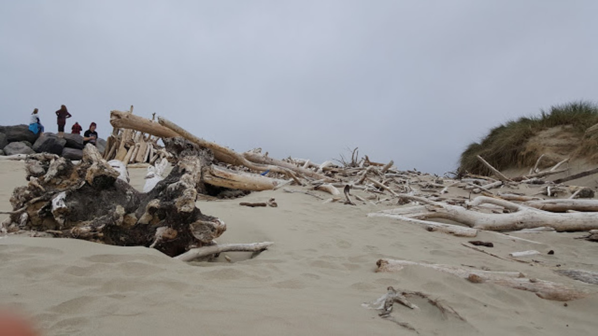 With a large supply of driftwood that has washed ashore, it's time to build some shelters.