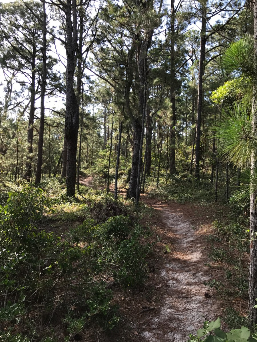 Hammock Hills Trail on the National Seashore is an easy hike with interesting things along the way.