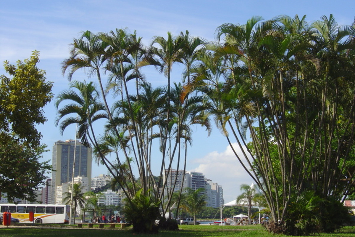 Palms highlight the skyline in central Botofogo.