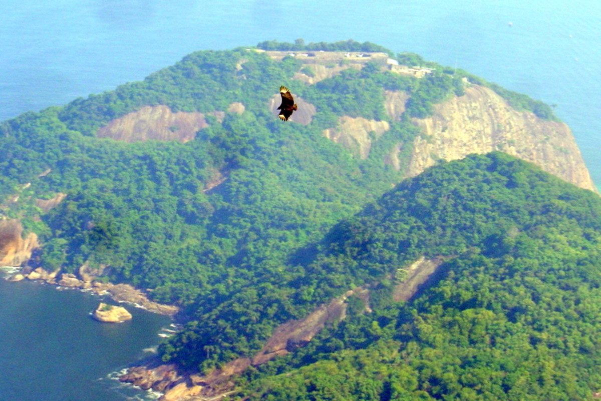 A black vulture (top, center) soaring out from Morro da Urca, as seen from Sugarloaf Mountain, Rio.