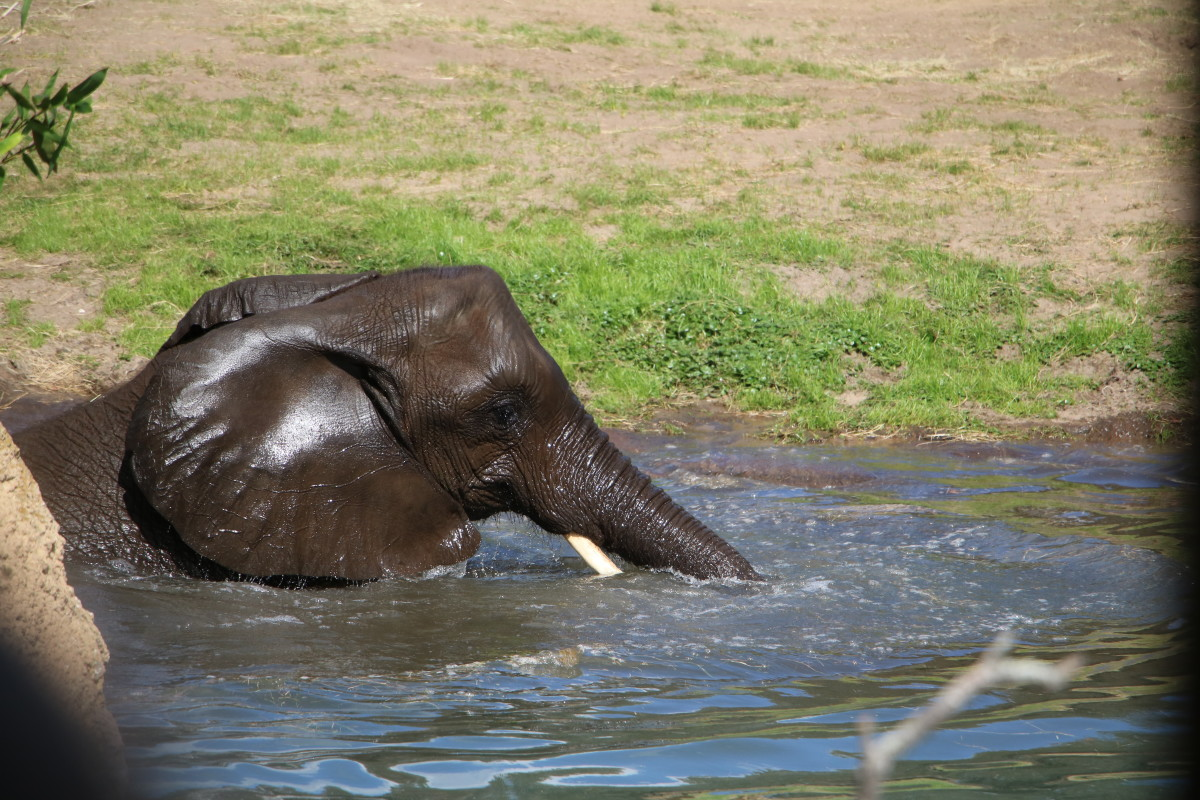 Get up close to elephants in the Caring for Giants tour!