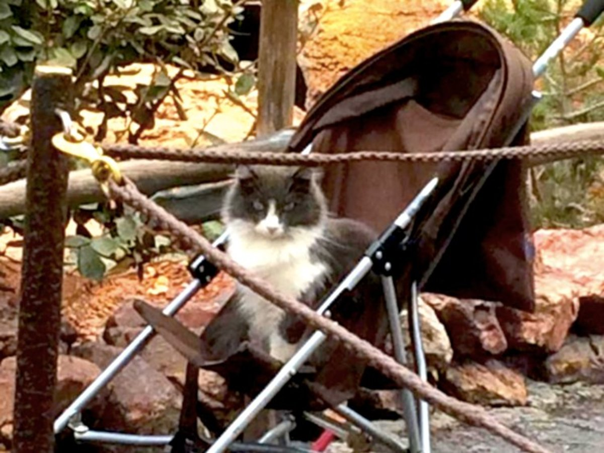 The Disneyland cats can sometimes be found doing funny cat things, like trying to go for stroller rides. Remember that the cats are feral, so you should try to avoid approaching them unless necessary.