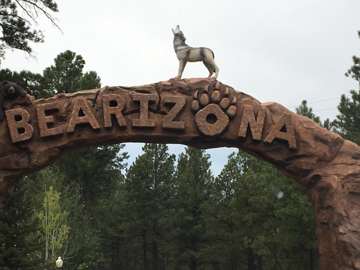 Bearizon in Williams, Arizona is a great drive-through adventure. Don't forget to do the walk-through portion and stop by the gift shop, too. Your dog can do the drive-through portion of the zoo. They are not allowed in the walk-through.