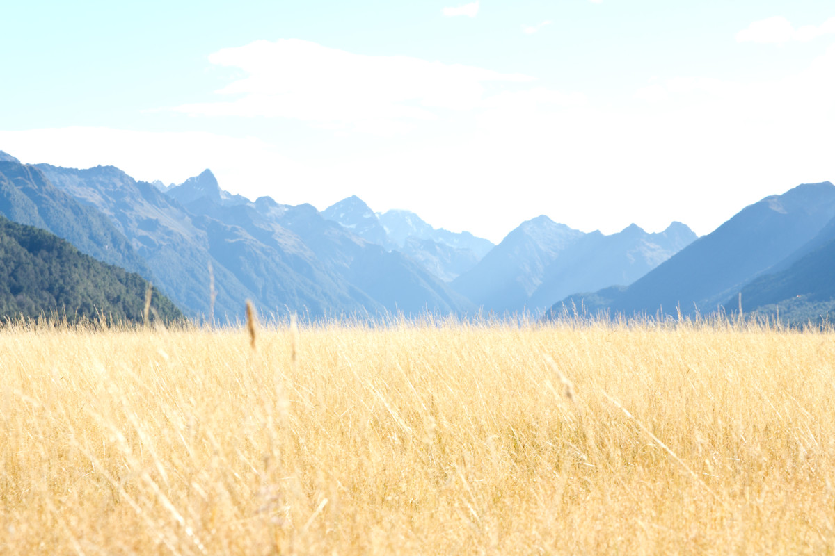 A view on the way to Milford Sound, outside of Queenstown, New Zealand.