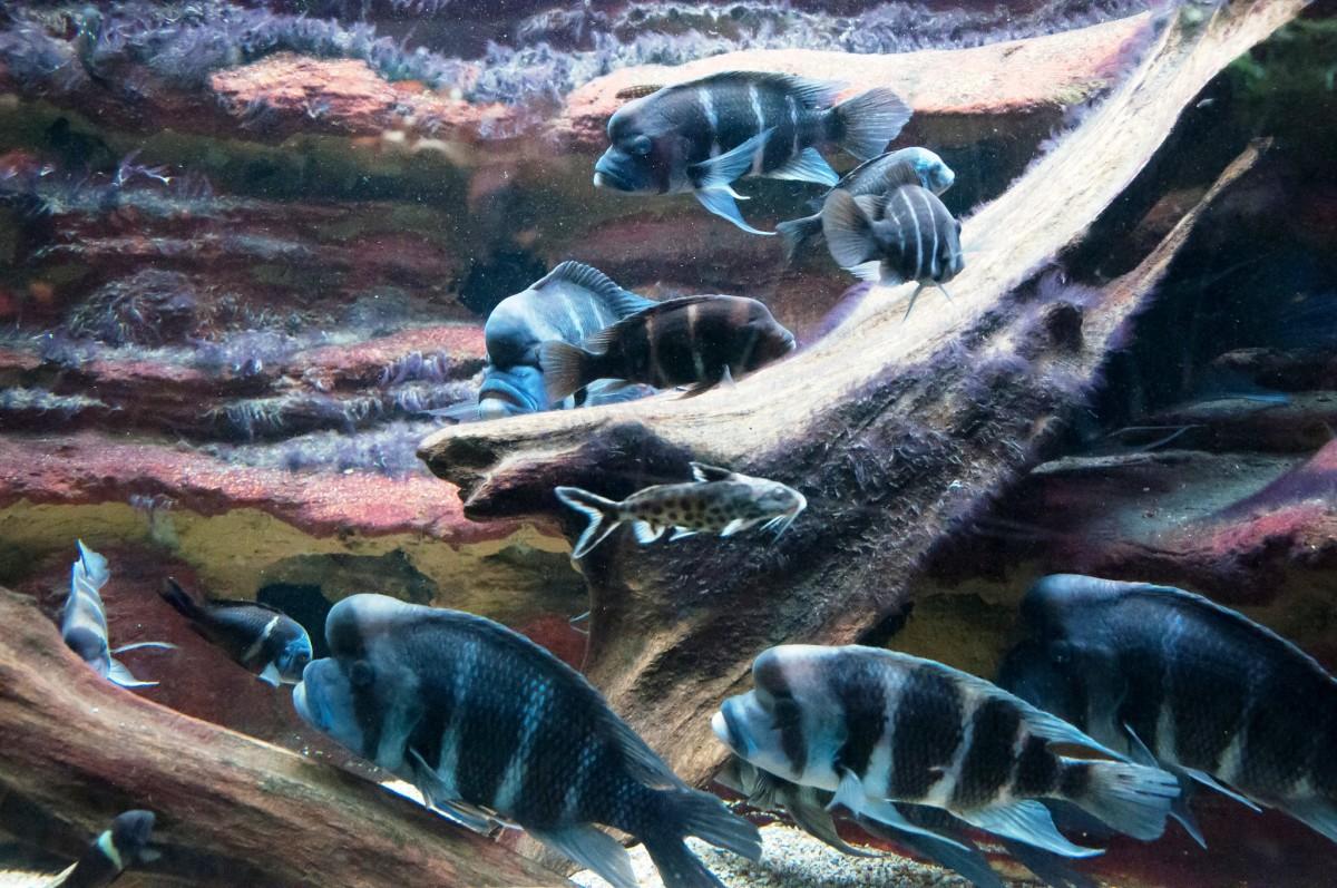 Shedd Aquarium in Chicago, Illinois