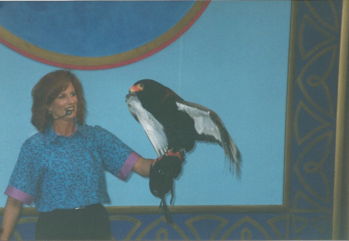 Bird show at Busch Gardens circa 2000.