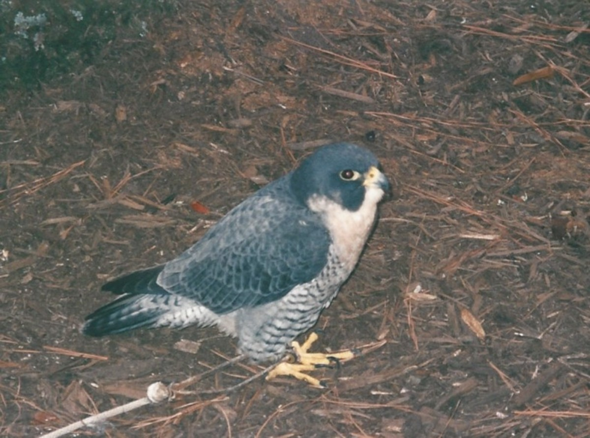 A bird at Busch Gardens circa 2010.