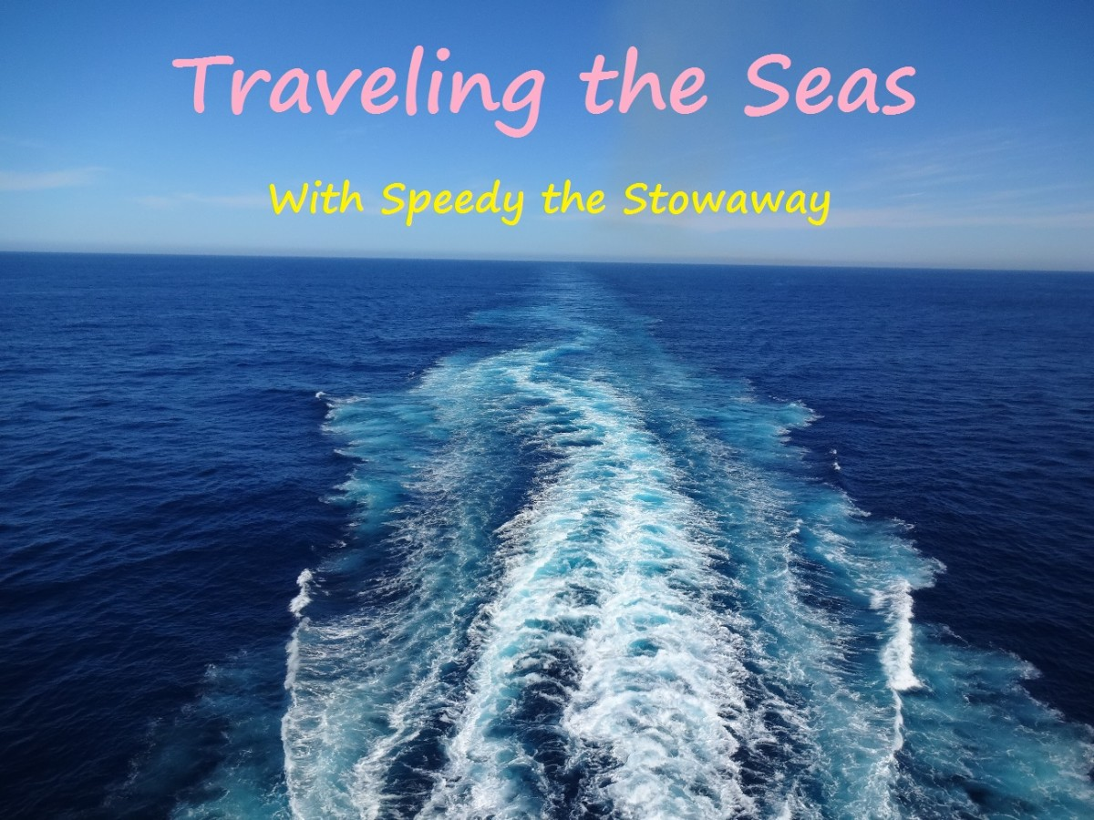 Traveling the Seas With Speedy the Stowaway