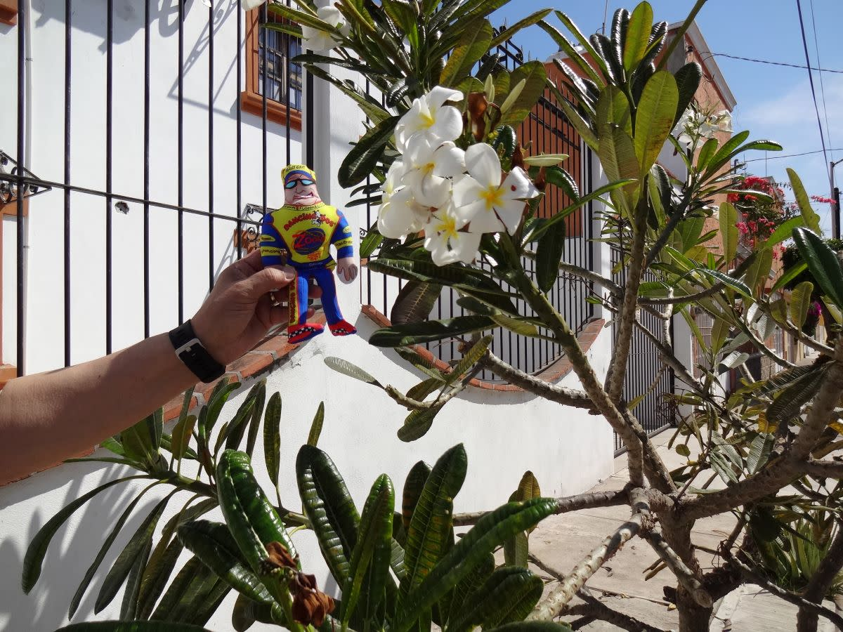 Speedy took time to stop and smell the Frangipani in Mazatlán, Mexico.