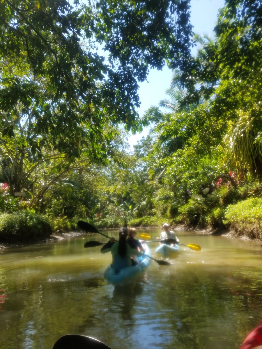 Kayaking In The Mangrove Swamp