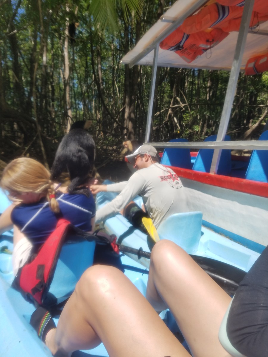 Monkey Jumping On Lady In Kayak