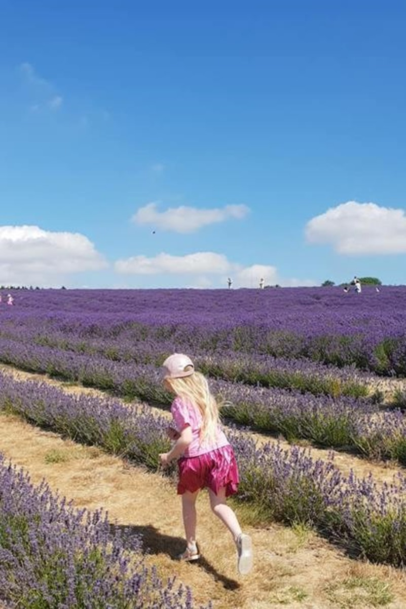 Family friendly and always popular, Cotswold Lavender is a fantastic day out.