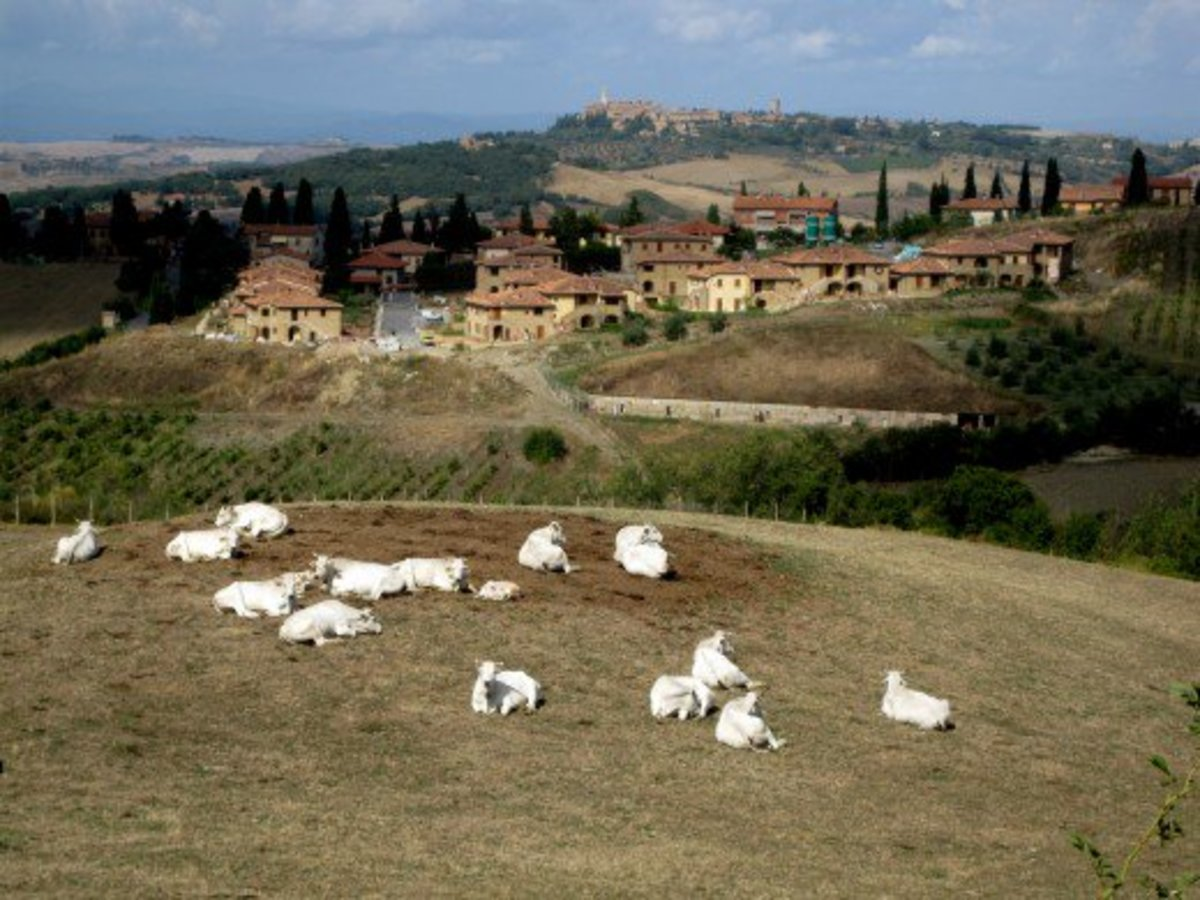 The Rolling Hills of Tuscany