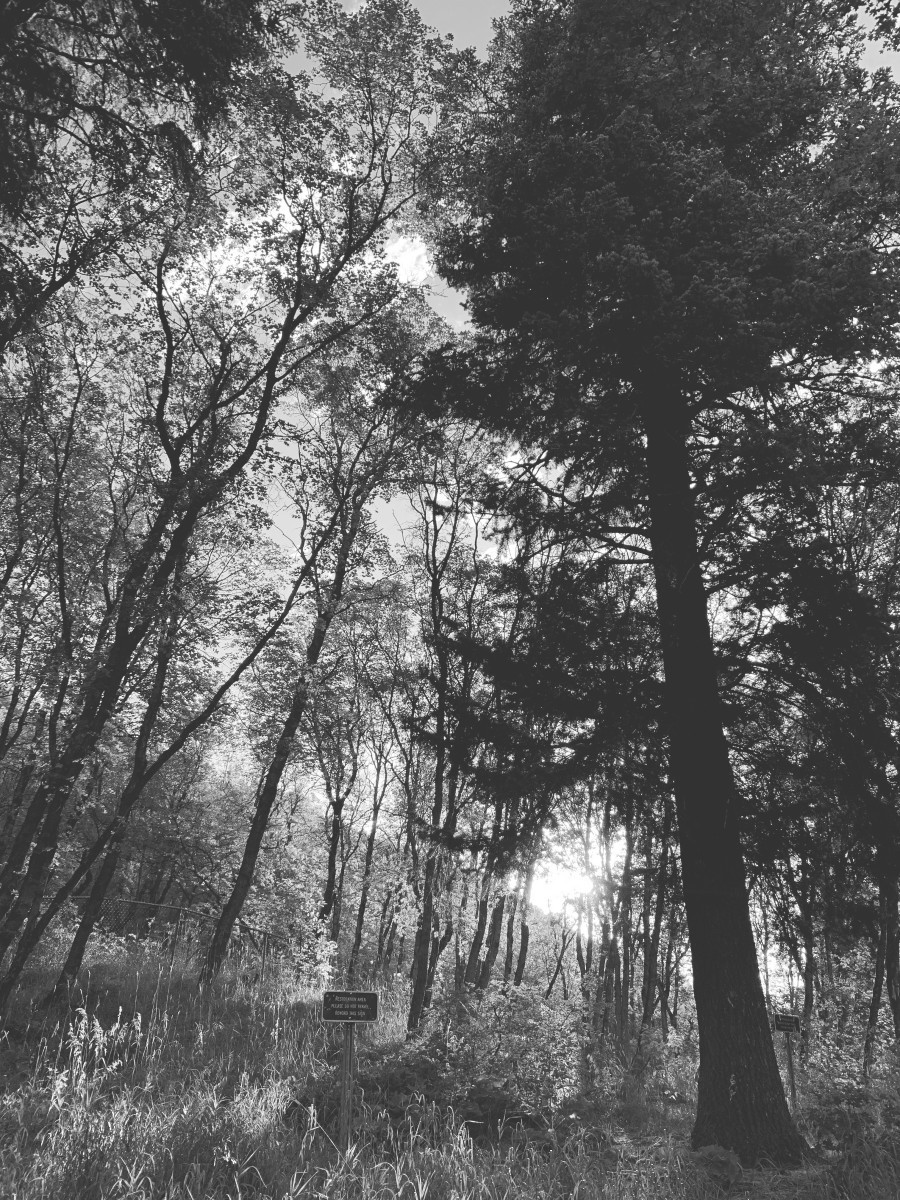 Beautiful Millcreek Canyon in black and white.