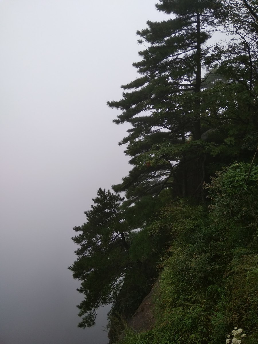 Trees cling to the cliffside in the fog.