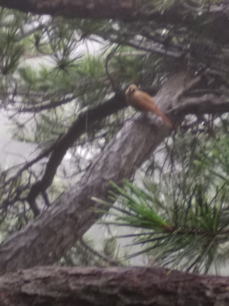 A bird (still unidentified) lands on a branch and regards us briefly before flying off.