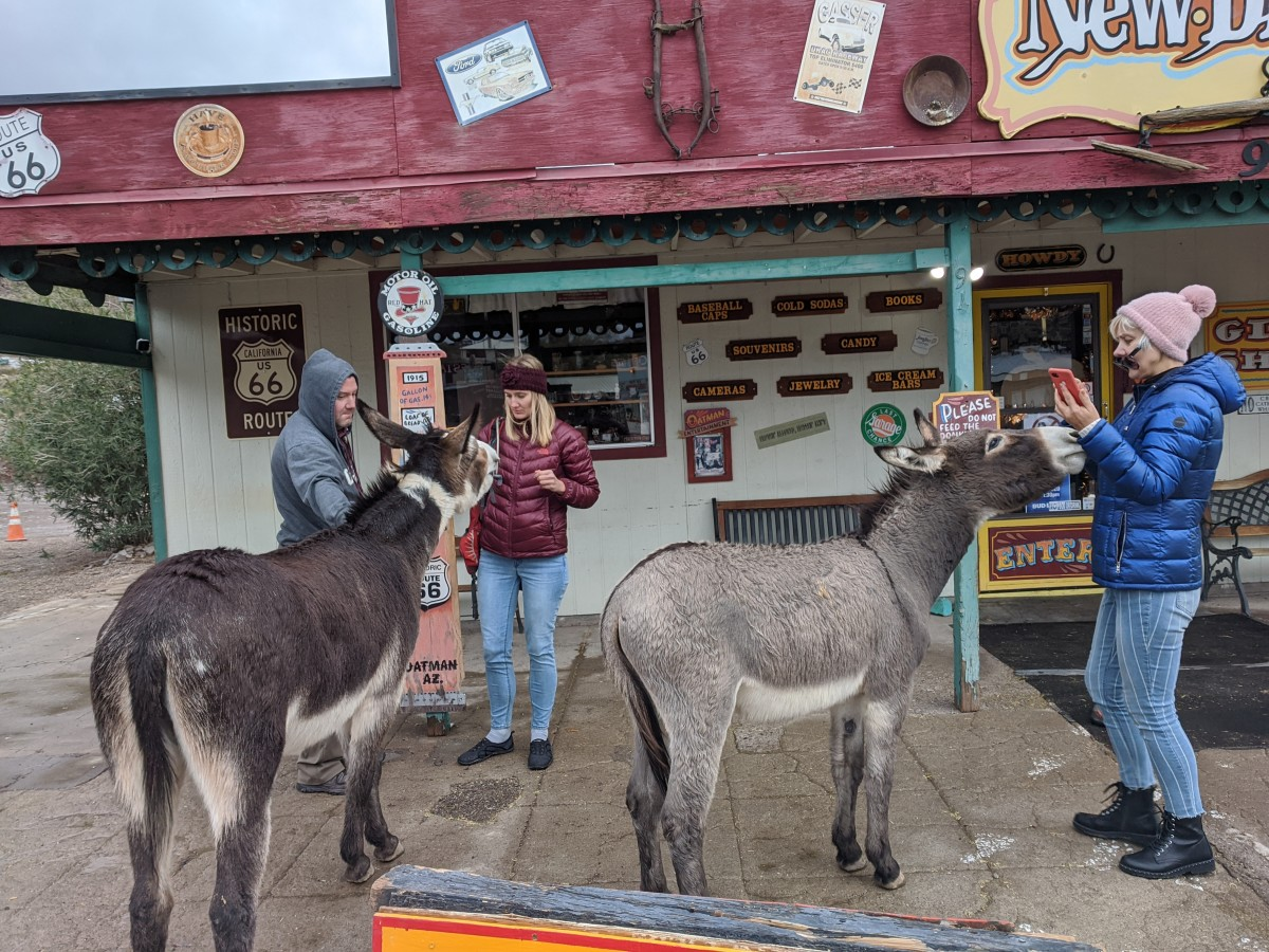 Burros posing for pictures while hoping to get paid with treats.  While easy-going, the burros are wild animals who will fight if they feel threatened.