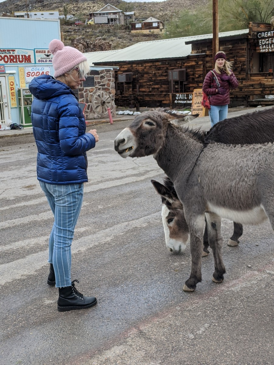 A couple of burros chatting with my wife on Main Street in Oatman, AZ.