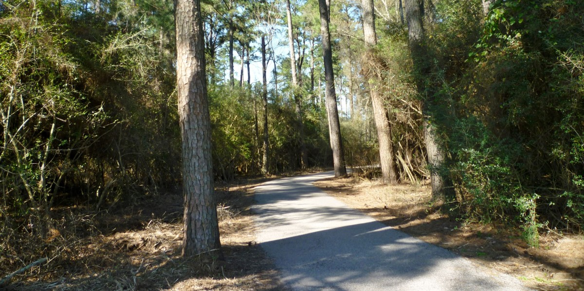 Paved trail in Burroughs Park