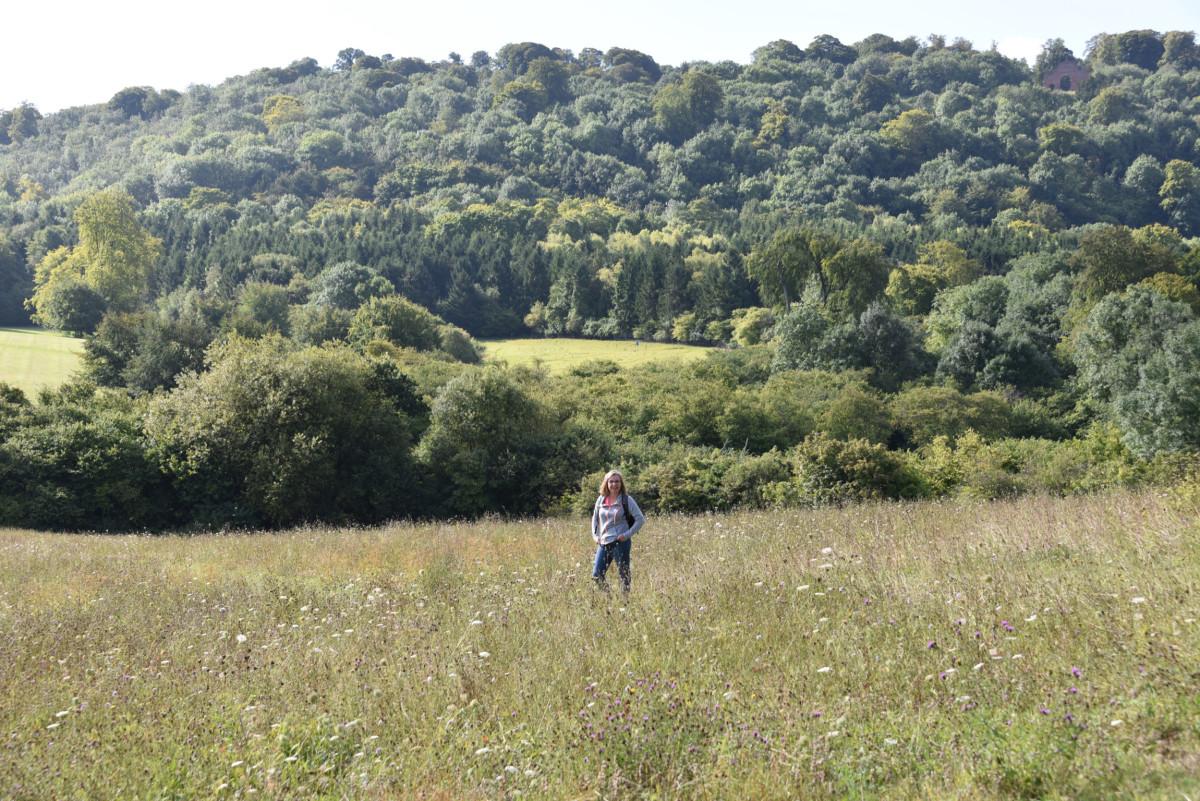 Fields Surrounding Highclere Castle