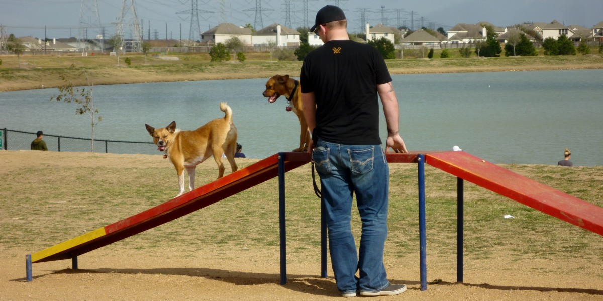Agility equipment for dogs at Goforth Park
