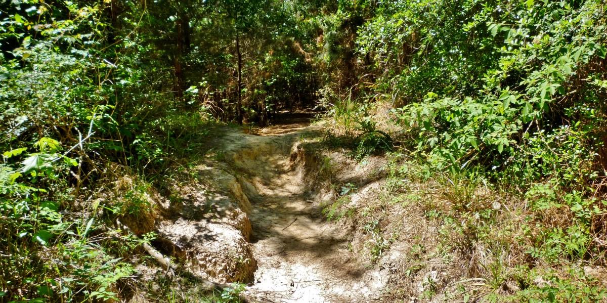 Rustic Trail