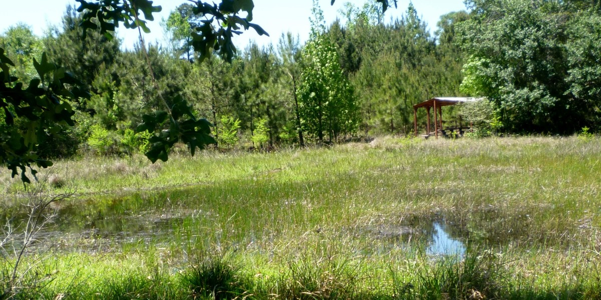 Looking across at the outdoor classroom