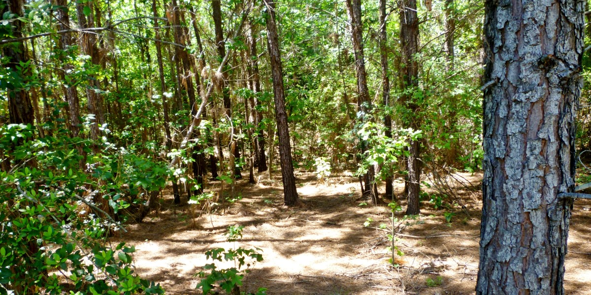 Forested areas