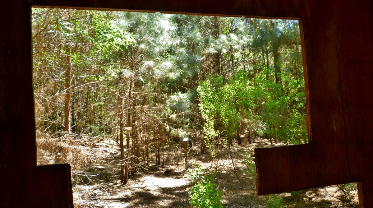 View looking out from bird blind