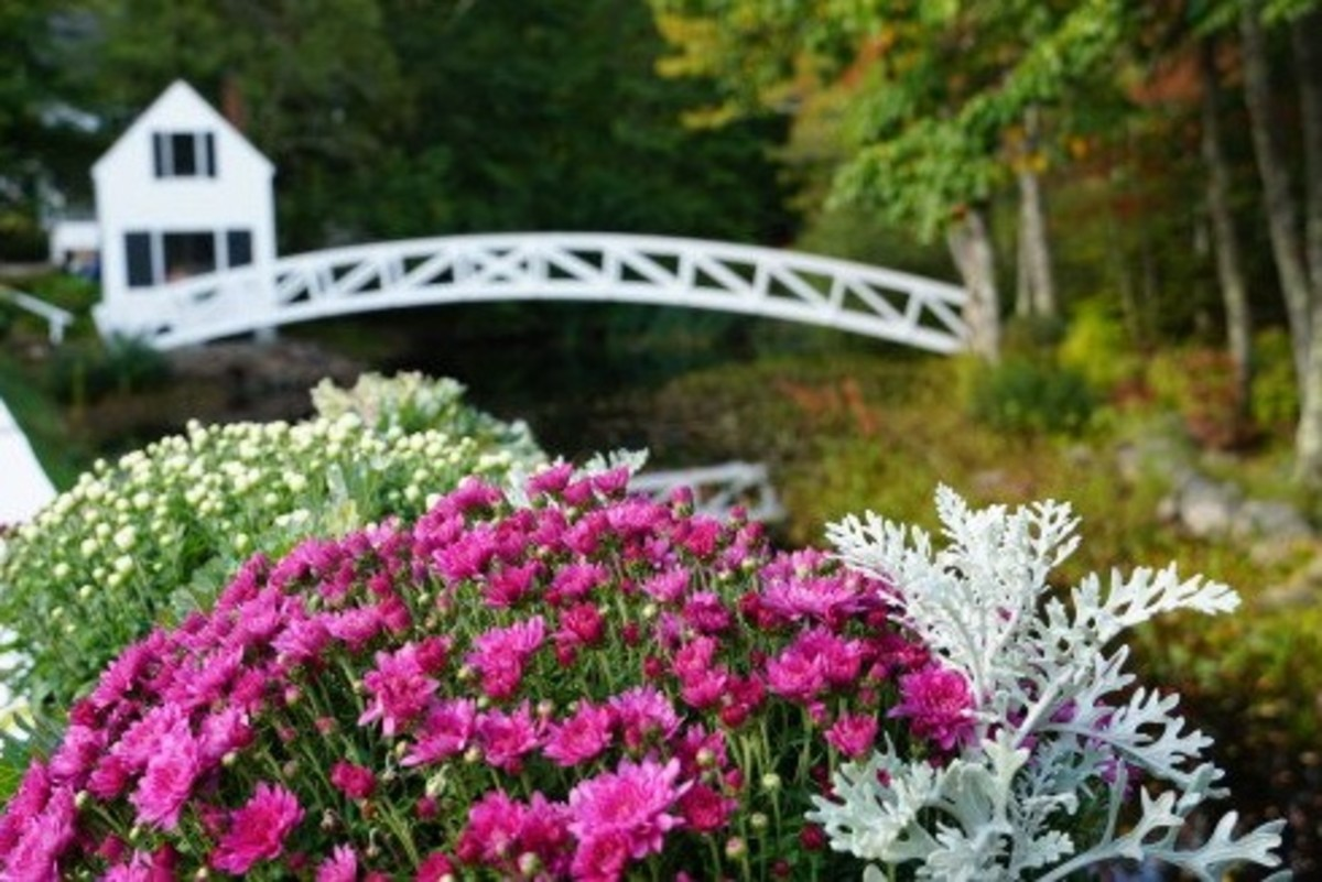 Colorful flowers and foliage surround the bridge