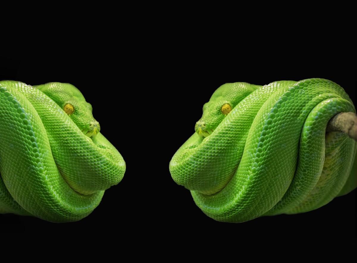 What is your snake dream mirroring for you?