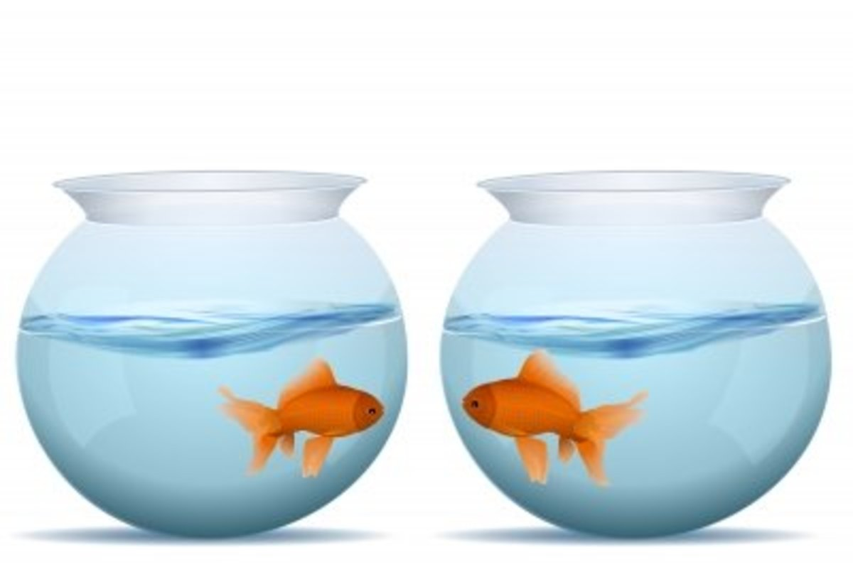 Two fish in two separate bowls may relate to feeling disconnected from others.