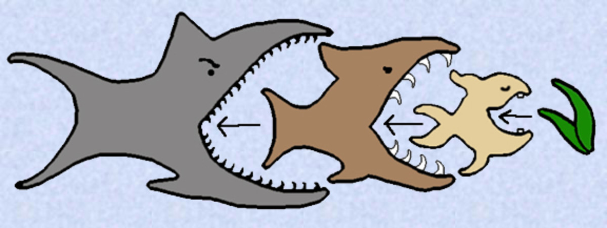 The fish's place within the food chain may reveal a lot to the dreamer about where they think they are socially, their level of confidence, and their sense of power.