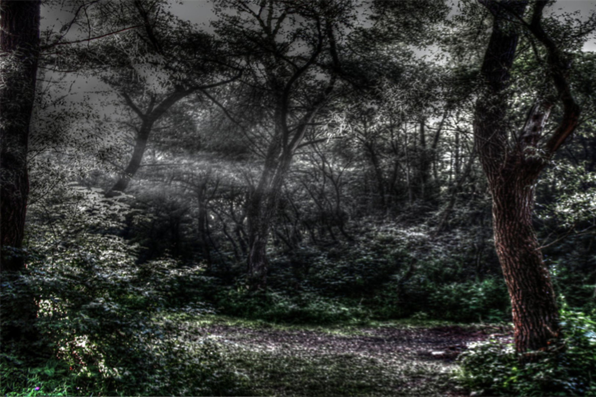 In a dark, dark wood....