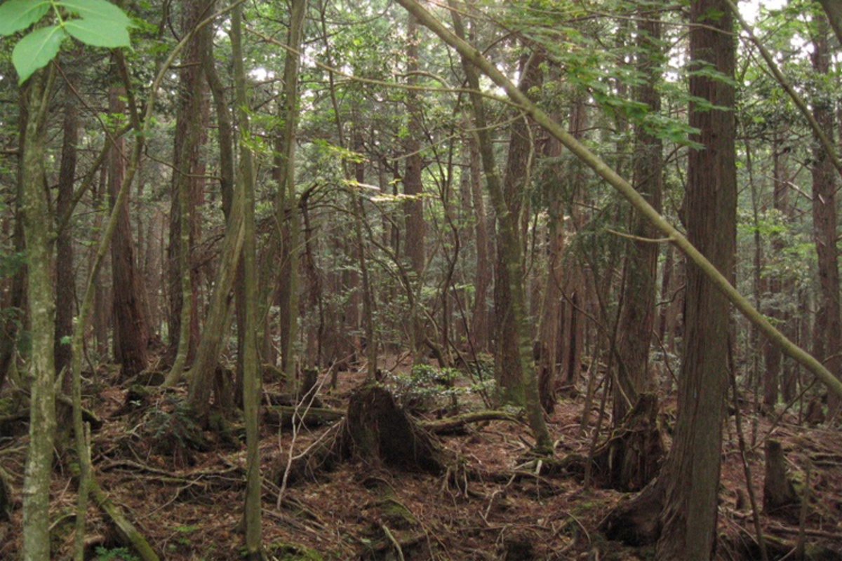 """The """"suicide forest"""" where many Japanese people go to end their lives, in woods that are said to be haunted with nightmares. Inspired the 2016 horror film """"The Forest"""" with Natalie Dormer."""
