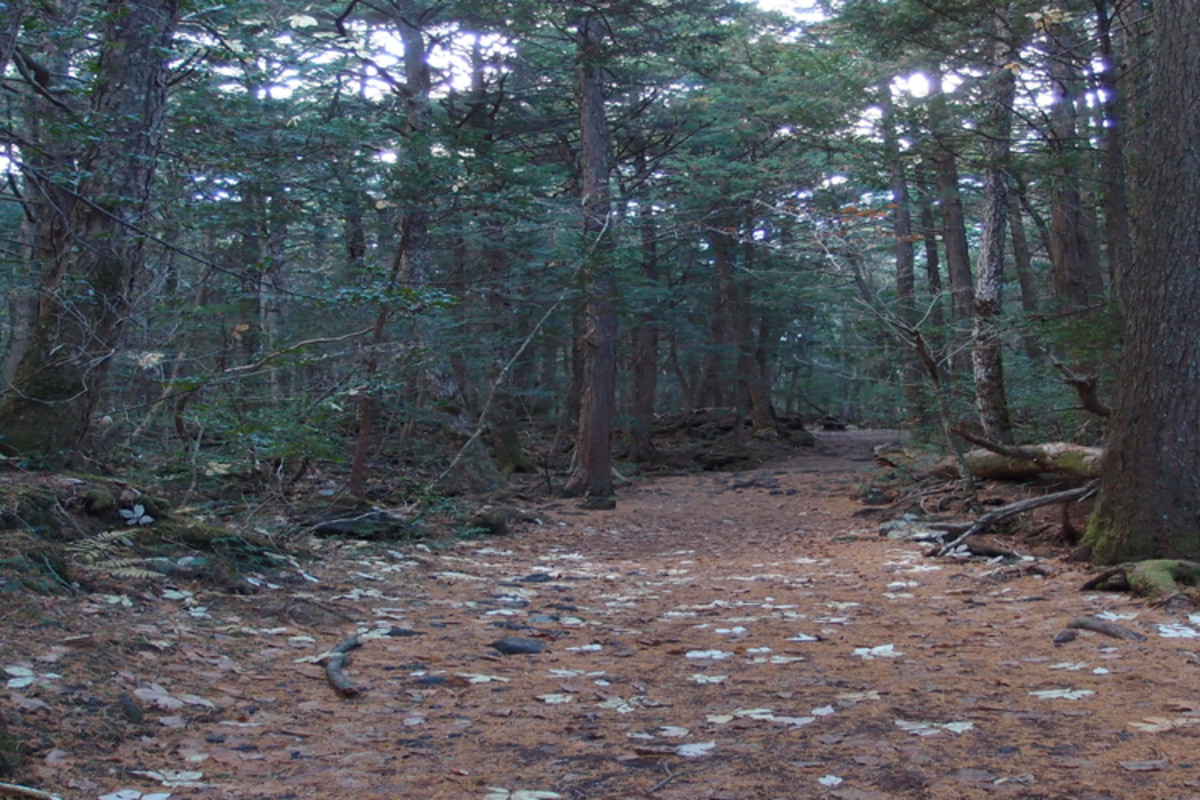 It's believed that the yurei (Japanese ghosts) torment those who enter the forest and try to drive them off the path.