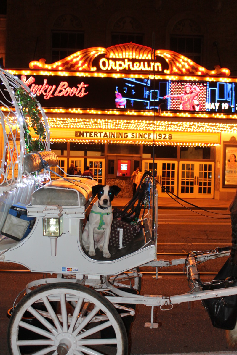 A dog ghost in front of the Orpheum Theatre in Memphis. Or maybe just a dog.