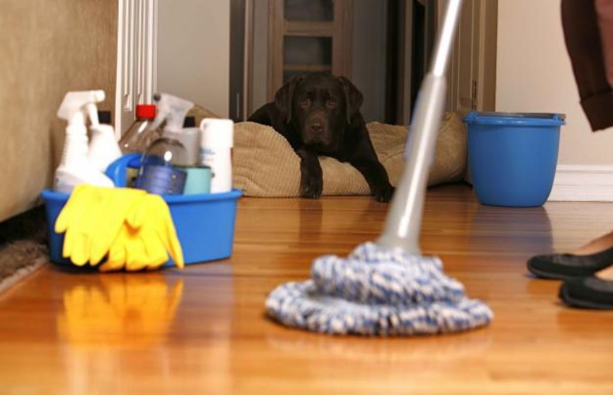 Dust, Mop, Sweep