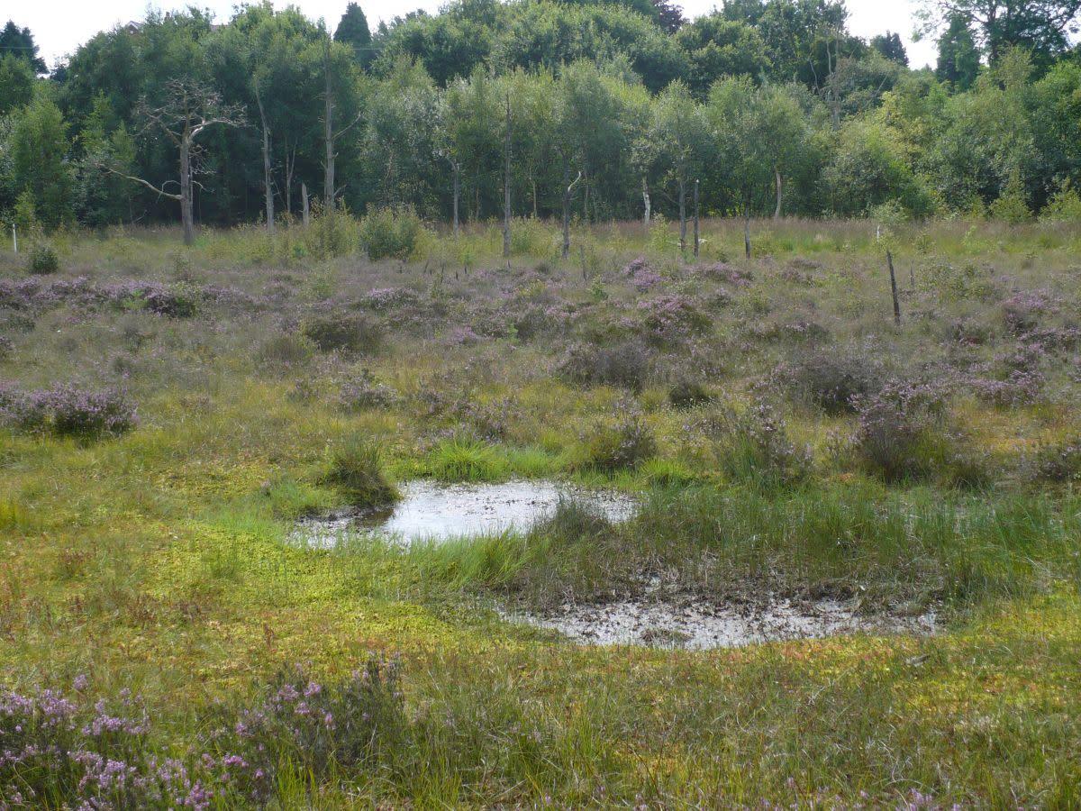 Wybunbury Moss