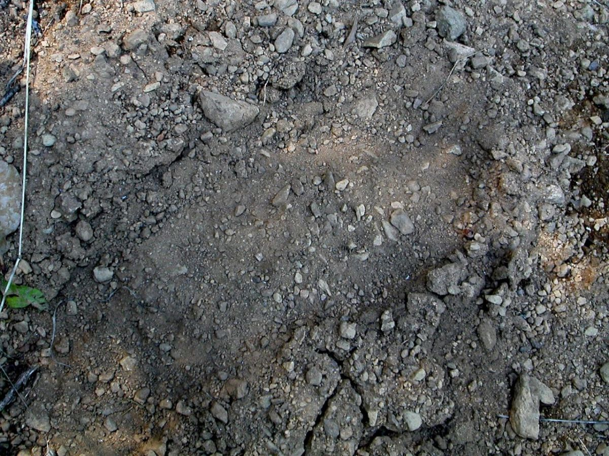 Photo of an alleged Bigfoot print.