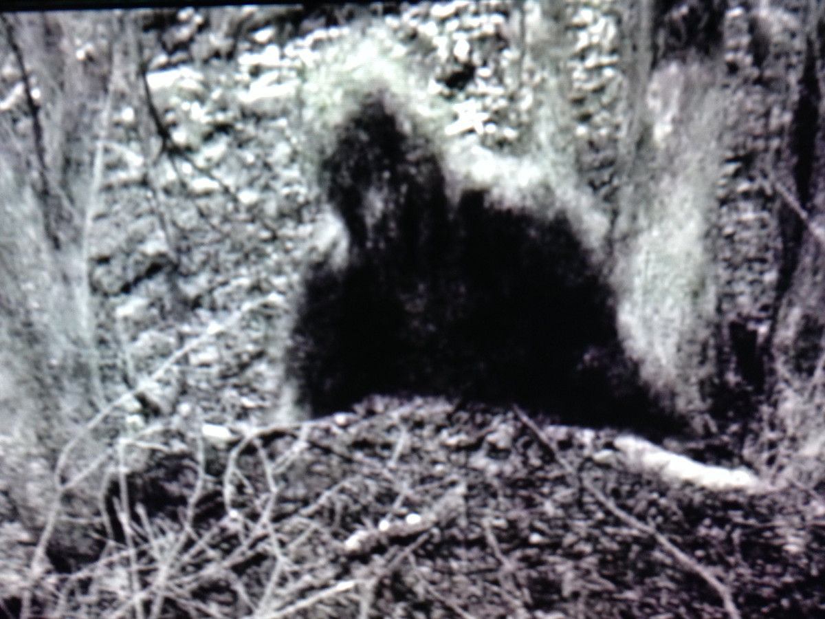 A trail cam photo taken by the AIMS team on Mountain Monsters.