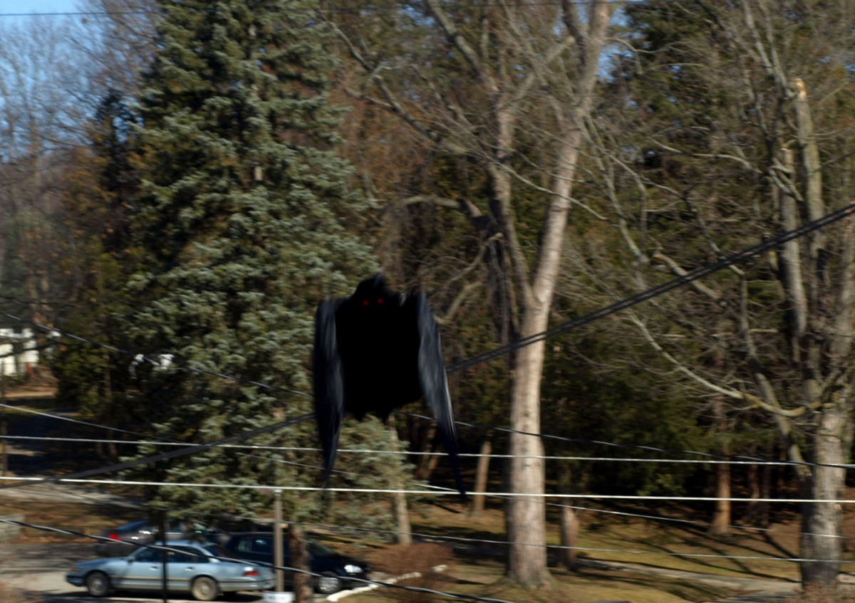 An alleged photo of Mothman.
