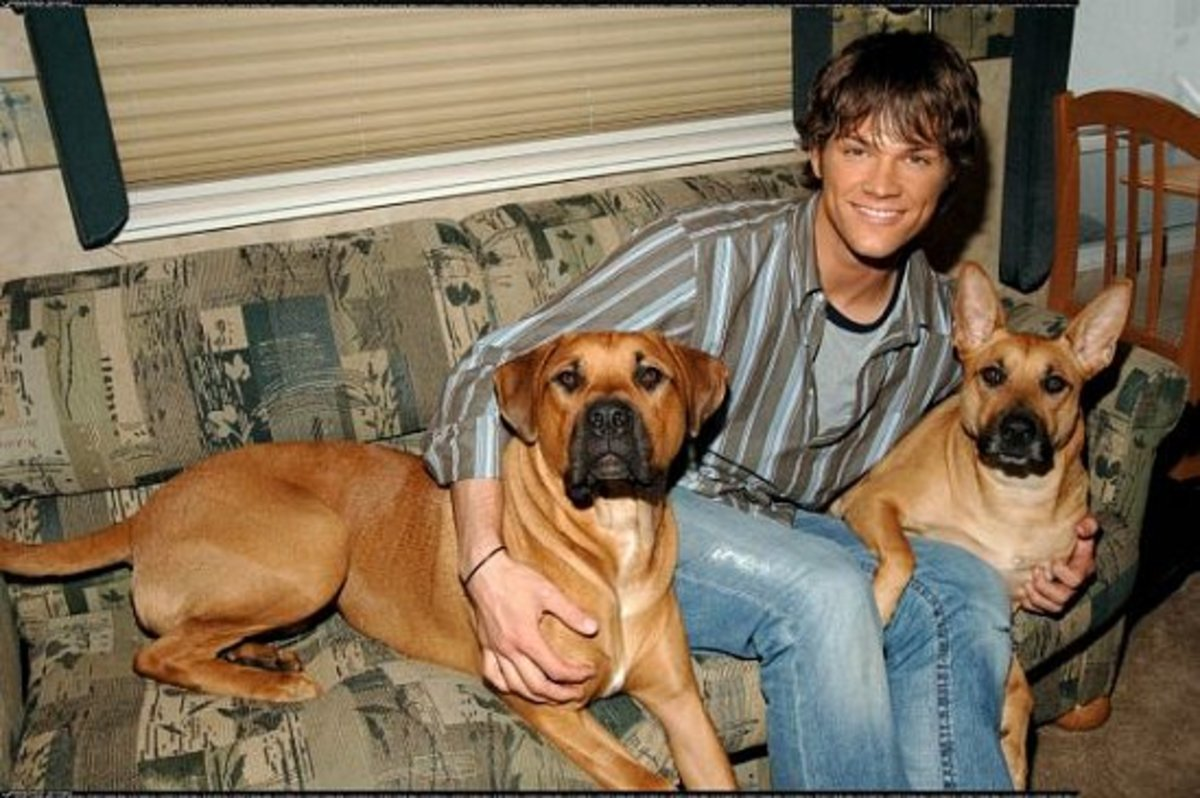 Jared with Sadie and Harley