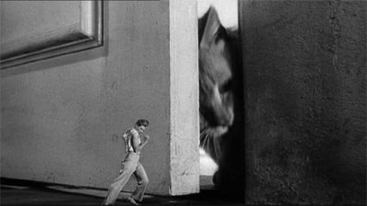 Scene from The Incredible Shrinking Man