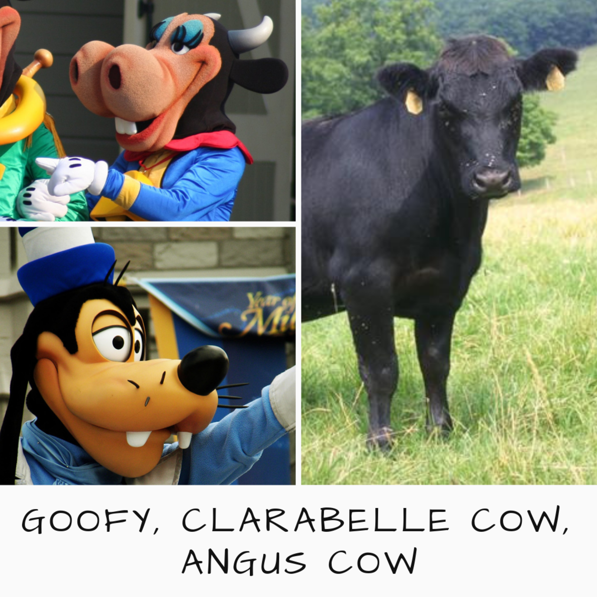 Goofy and Clarabelle Cow compared to the Angus breed. What species is Goofy? Decide for yourself.