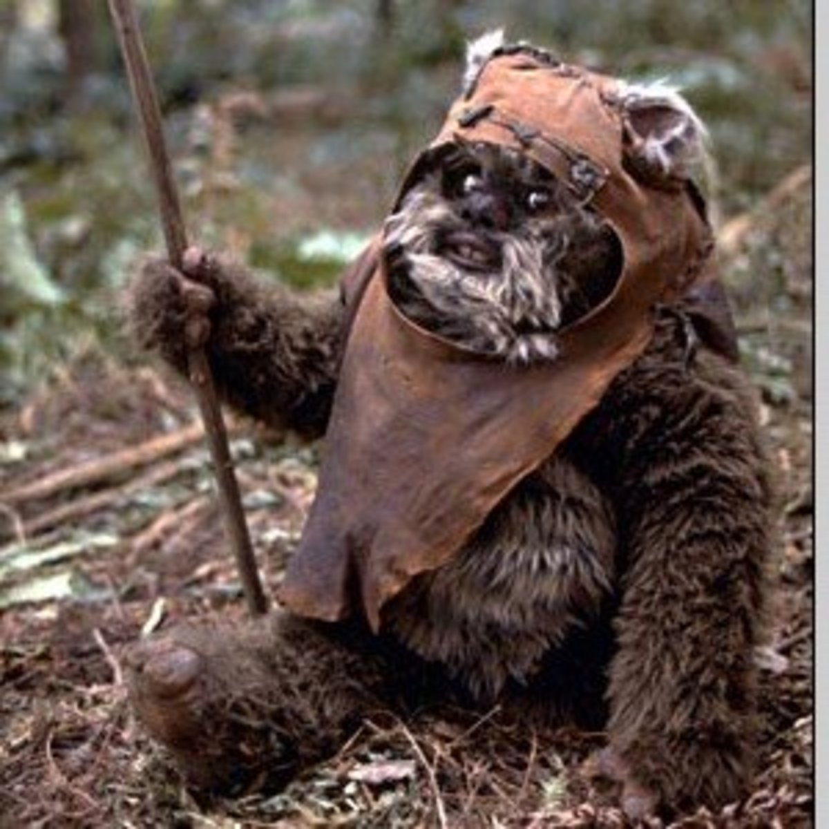 An Ewok in its natural habitat