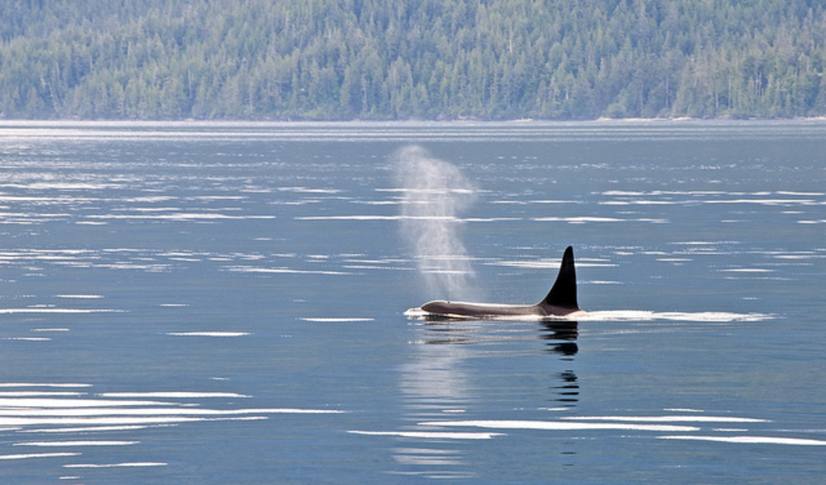 Why Blackfish is Dumb and Deceptive